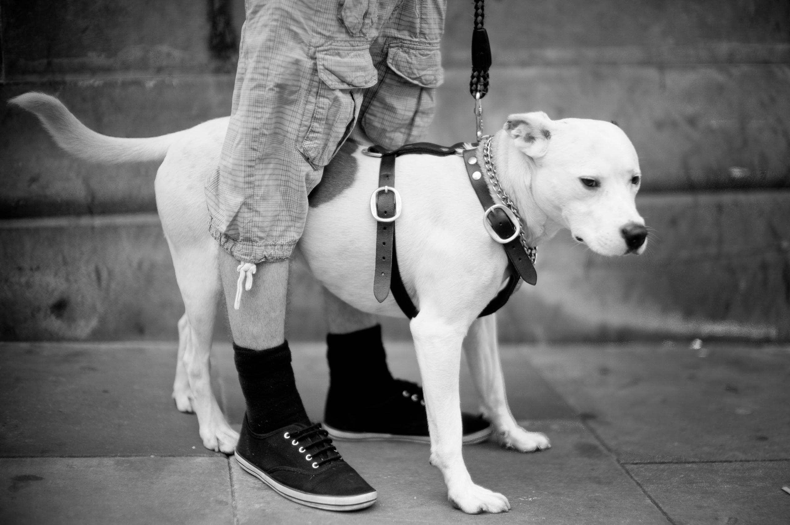 Workshop Portfolio Manchester Street Photography Dog By Brett Leica Photographer