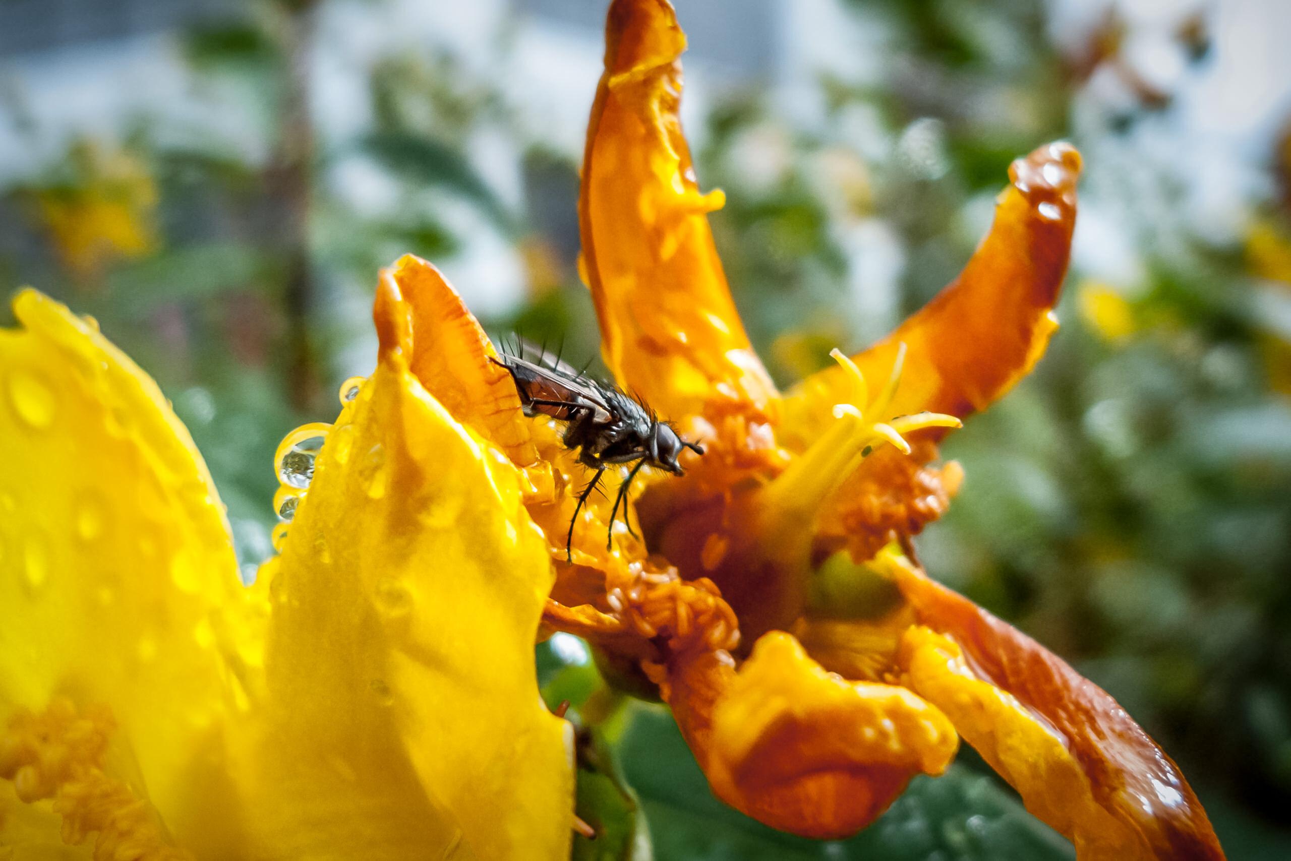 Wayfinder World Flower Fly By Brett Leica Photographer